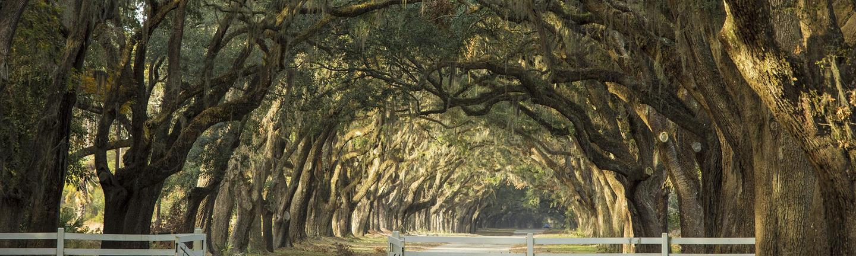 Deep South plantation home driveway