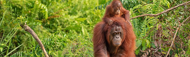 Borneo holidays hero