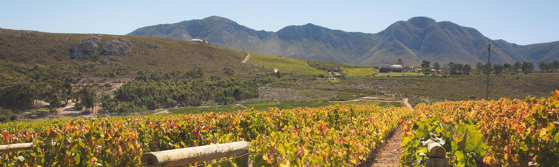 Hemel-en-Aarde Valley, South Africa
