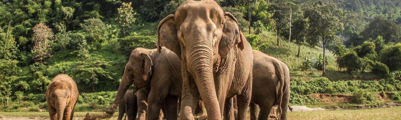 Responsible wildlife experiences, Thailand