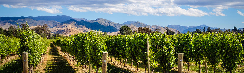 Marlborough wine region, New Zealand