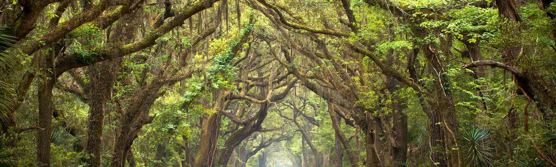 Deep South trees