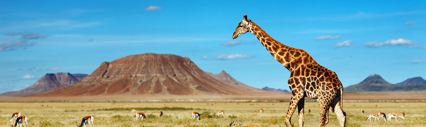 Giraffe and impala in Africa