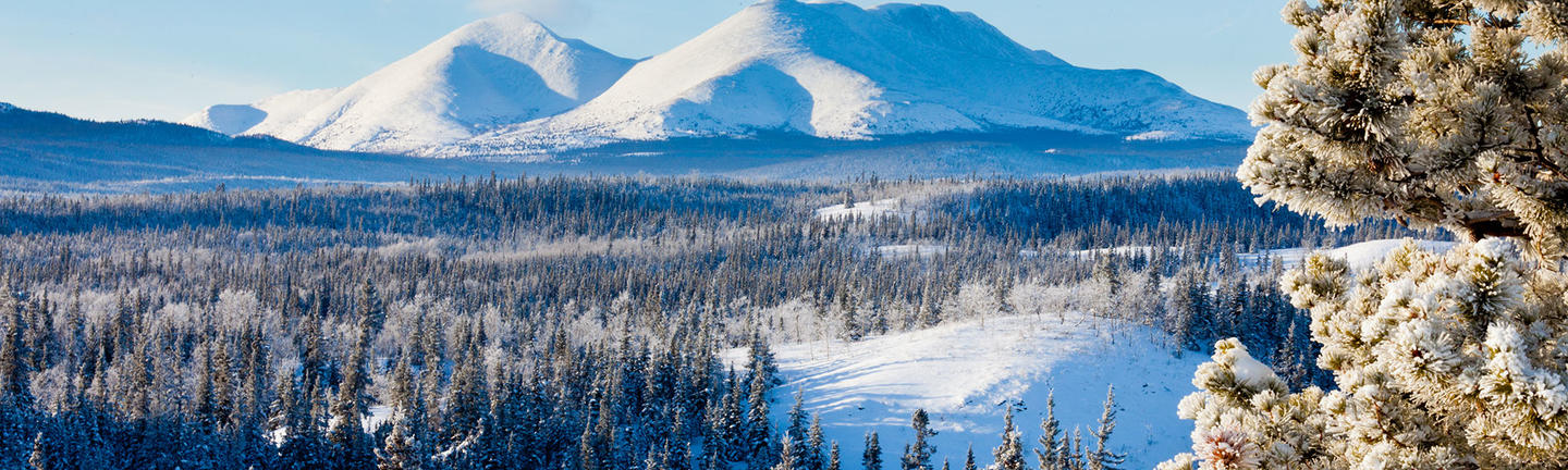 Snow covered scenery in Yukon