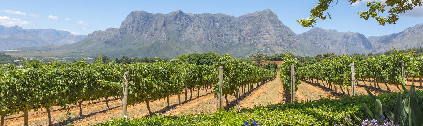South Africa Vineyards