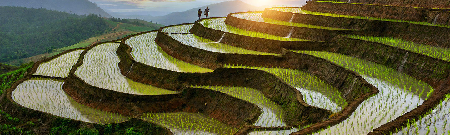 Thailand rice terrace