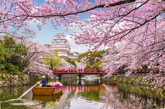 Japan-blossom
