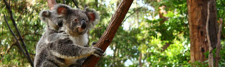 Melbourne to Sydney Coastal Drive Holiday