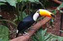 Toucan | by James Sheppard of Flight Centre