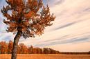 Autumn Colours, Fish Creek Provincial Park