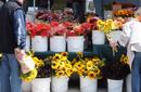 Flowers For Sale, Ferry Building Markets, San Francisco | by Flight Centre's Tiffany Apatu