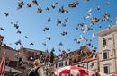 Pigeons, Croatia