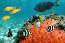 Admire the Marine Life, Bora Bora