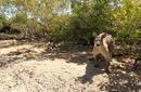 Kangaroos on Daydream Island | by Flight Centre's Stephen Bullock