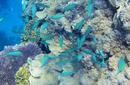 Coral and Fish | by Flight Centre's Stephen Bullock