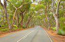 Drive through the Red Gums