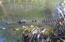 Saltwater Crocodile | by Flight Centre's Katrina Imbruglia