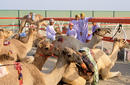 Cattle Market, Nizwa   by the Sultanate of Oman Tourism