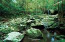 Daintree Rainforest, a day trip from Port Douglas