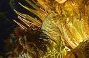 Rio Carnival | by Flight Centre's Jayne Price