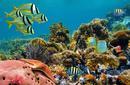 Admire the Marine Life