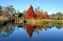 Autumn Colours, Swan Lake