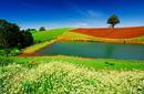 Exquisite colours