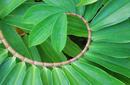 Palm Leaf | by Flight Centre's Kristin Bonner