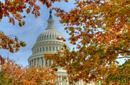 Autumn Colours, Capitol Hill