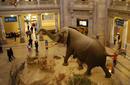 The Museum of Natural History   by Flight Centre's Nafisa Sabu
