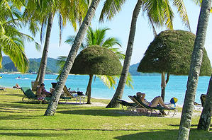 Lounges lining the beach shaded by palm trees