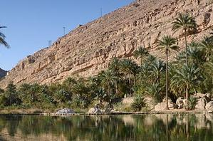 An oasis with palm trees in the desert