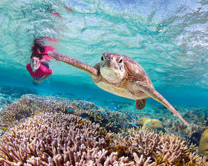 Great Barrier Reef Island Stays Holiday