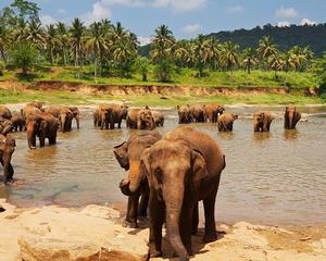 Discover Sri Lanka Holiday