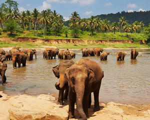 Discover Sri Lanka Holiday