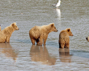 Whales, Bears & Vancouver Island Holiday