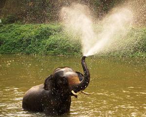 Bangkok, Beach & Elephants Holiday