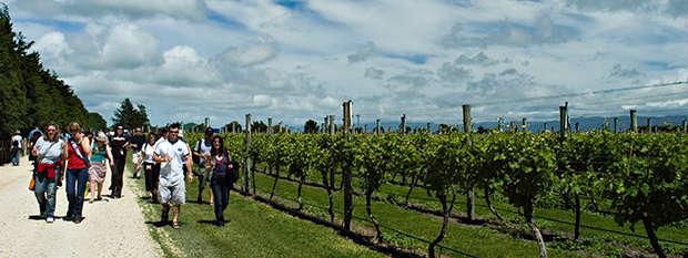 Martinborough wineries