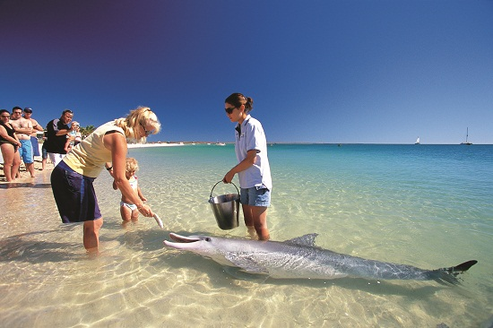 Feeding dolphins at Monkey Mia Western Australia