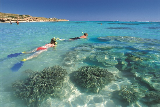 Snorkeling at Coral Bay Australia
