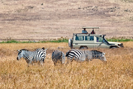 Tourists watching zebras from a 4x4 car during a Safari