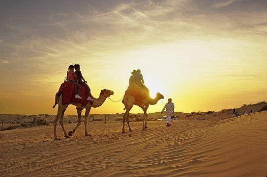 Camel rides in Dubai