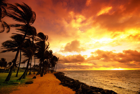Sunset on a Windy Beach in Hawaii