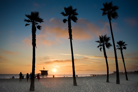 Pacific Ocean Sunset Against Palm Trees in California