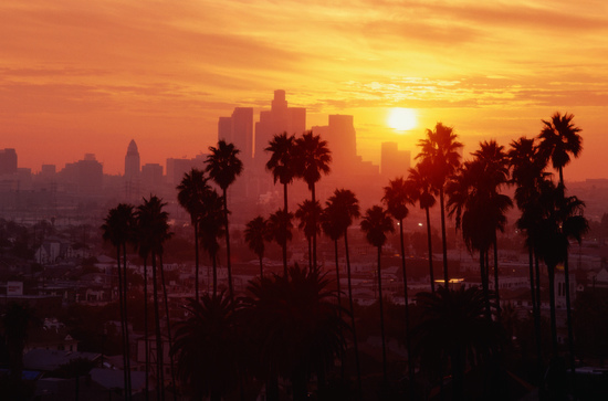 Sunset Through Palm Trees in Los Angeles, California