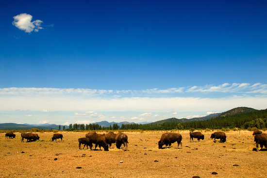 Northwest Prairie Spokane Buffalos, Washington State