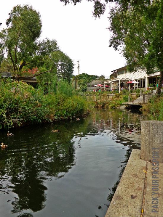 Matakana River, Auckland