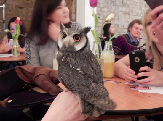 Owl-resize