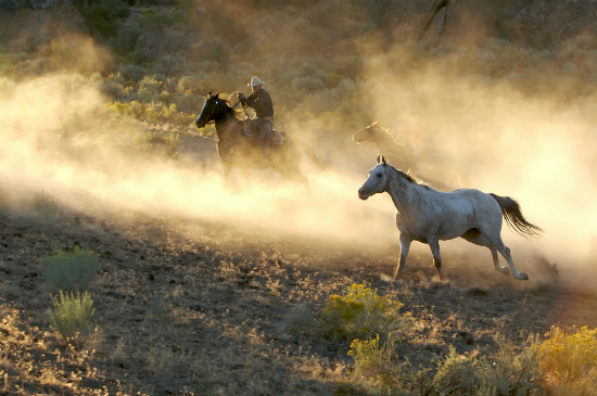 Yee-haw! Gallop through the Texan desert like a cowboy (or girl!)