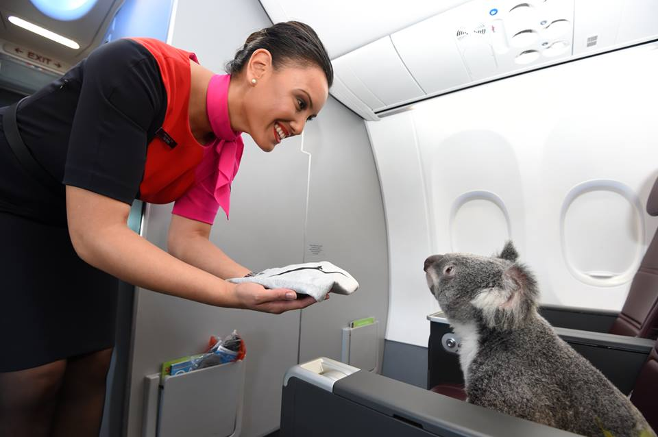 Arrive refreshed with a hot towel. Don't forget behind the ears! (Image: facebook.com/Qantas)